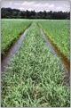 Gluten-Free and Carolina Rice Plantation